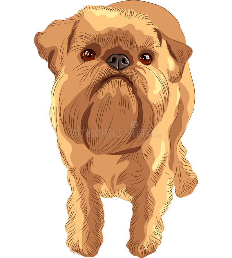 Vector Sketch red dog Brussels Griffon breed. Closeup portrait of the toy dog Brussels Griffon breed stock illustration