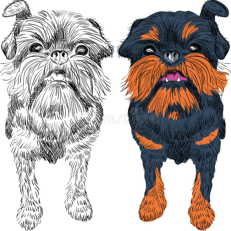 Vector sketch red dog Brussels Griffon breed. Closeup portrait of the toy dog Brussels Griffon breed royalty free illustration