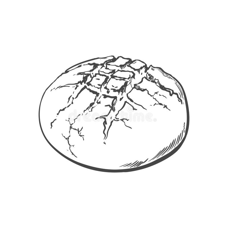 Vector sketch round bread isolated. Vector sketch fresh round rye bread loaf. Detailed hand drawn isolated illustration on a white background. Flour pastry stock illustration
