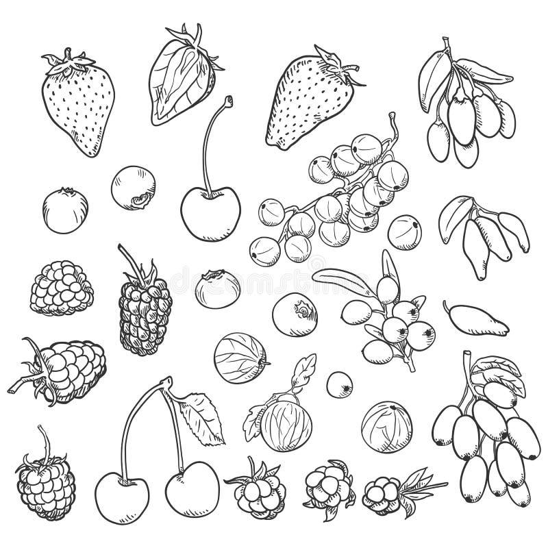 Vector Sketch Set of Berries royalty free illustration