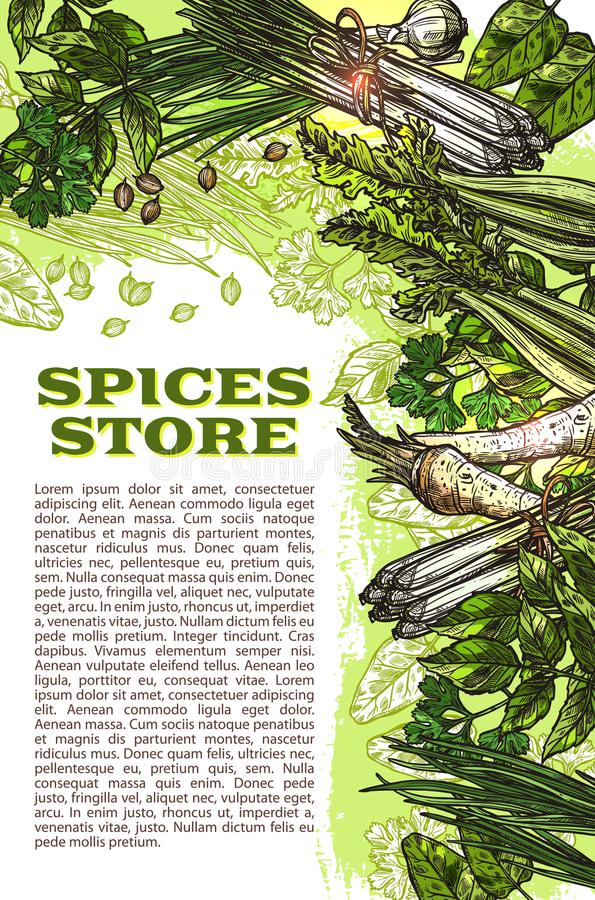 Vector sketch spices and herbs farm store poster royalty free illustration