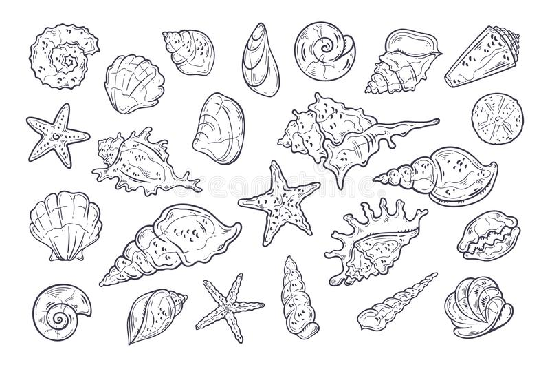 Vector sketching illustrations. Different types of seashells. Isolated objects for your design. Each object can be changed and moved stock illustration