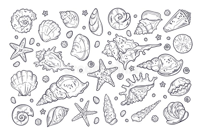 Vector sketching illustrations. Different types of shells and sea stones. Isolated objects for your design. Each object can be changed and moved vector illustration