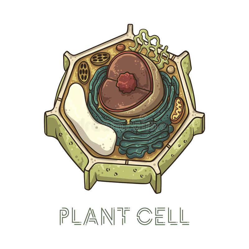Vector sketching illustrations. Schematic structure of plant cell. Isolated objects for educational material vector illustration
