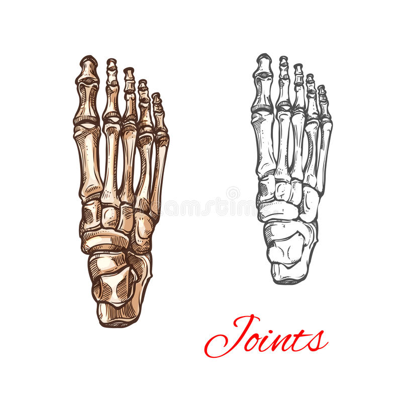 Vector Skizzenikone von Knochen oder von Gelenken des menschlichen Fußes stock abbildung