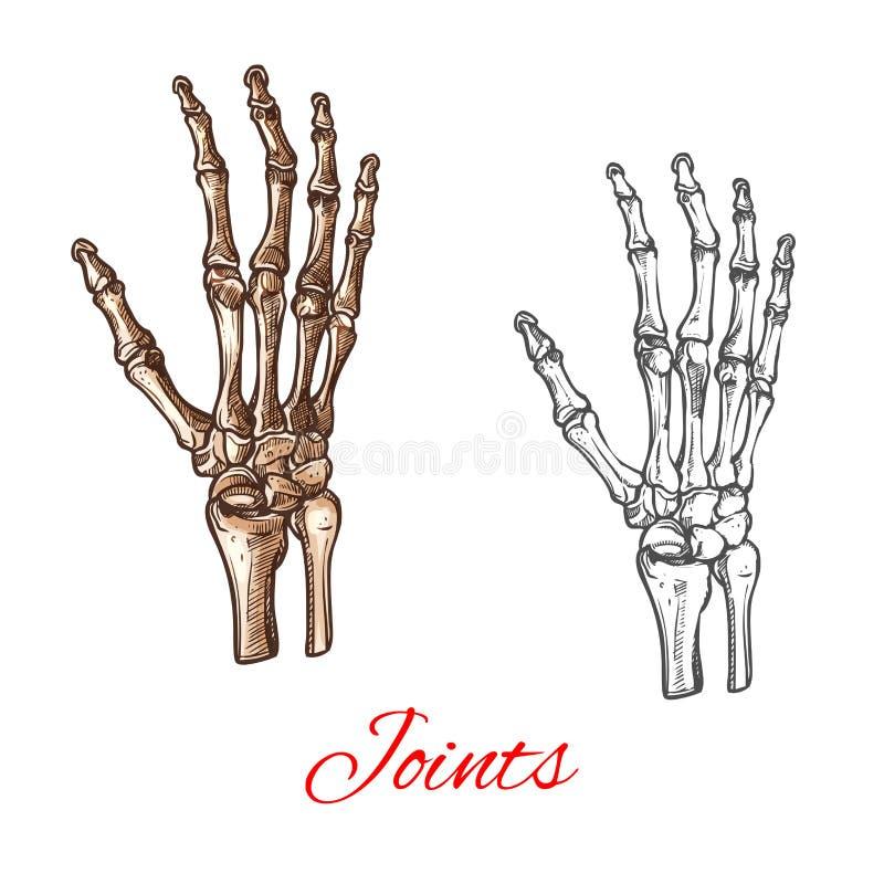 Vector Skizzenikone von menschlichen Handknochen oder -gelenken stock abbildung