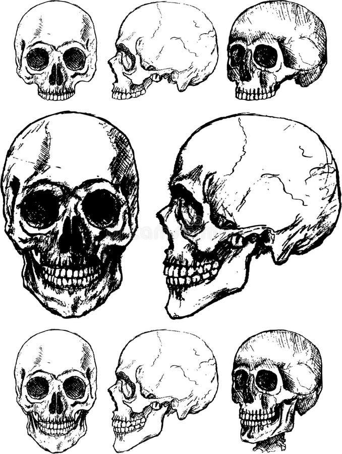Free Vector Skull Stock Photos - 14486473