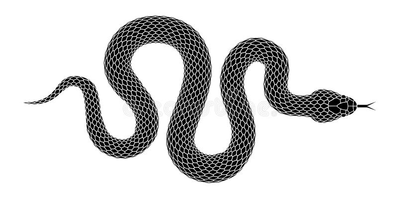 Vector snake silhouette isolated on a white background. vector illustration