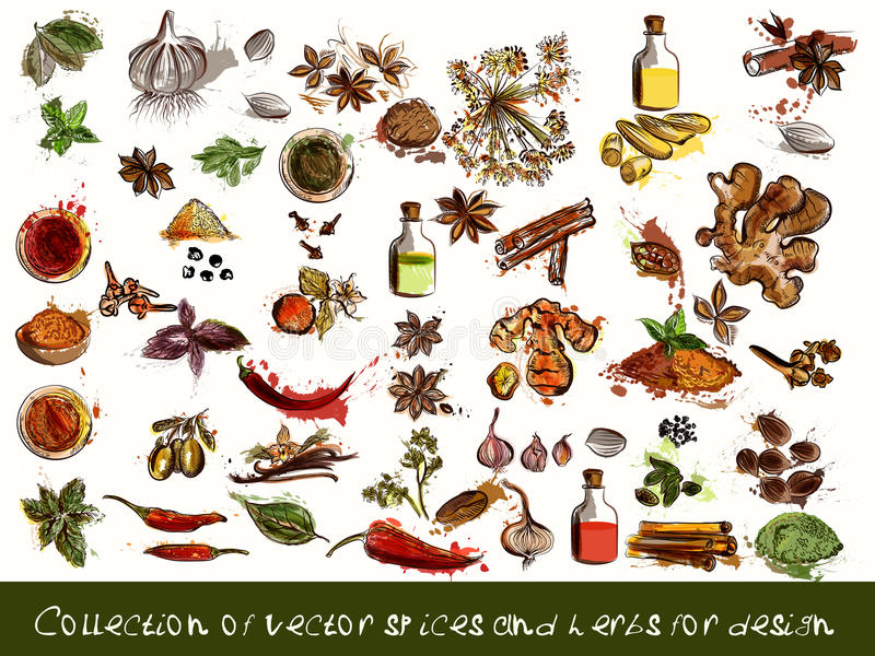 vector spices and herbs chili, vanilla, curry, mint, dill, parsley, anise and many other in engraved and watercolor styles vector illustration
