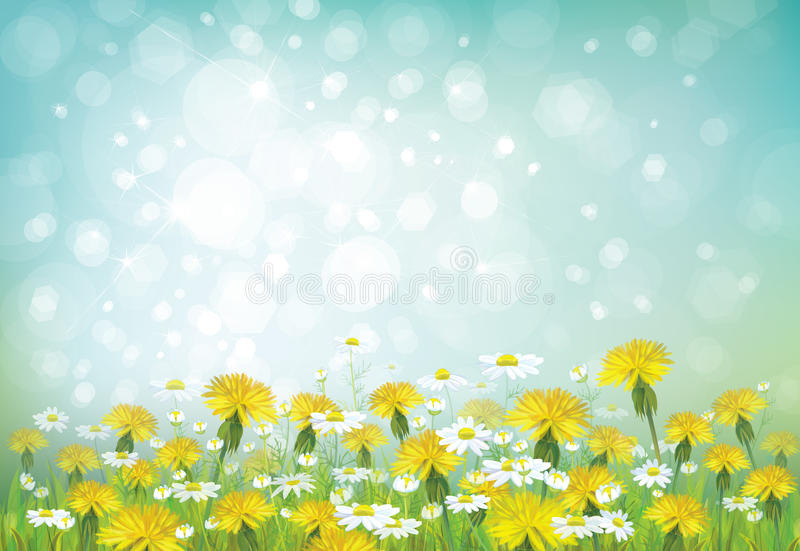 Vector spring background with chamomiles and dande vector illustration