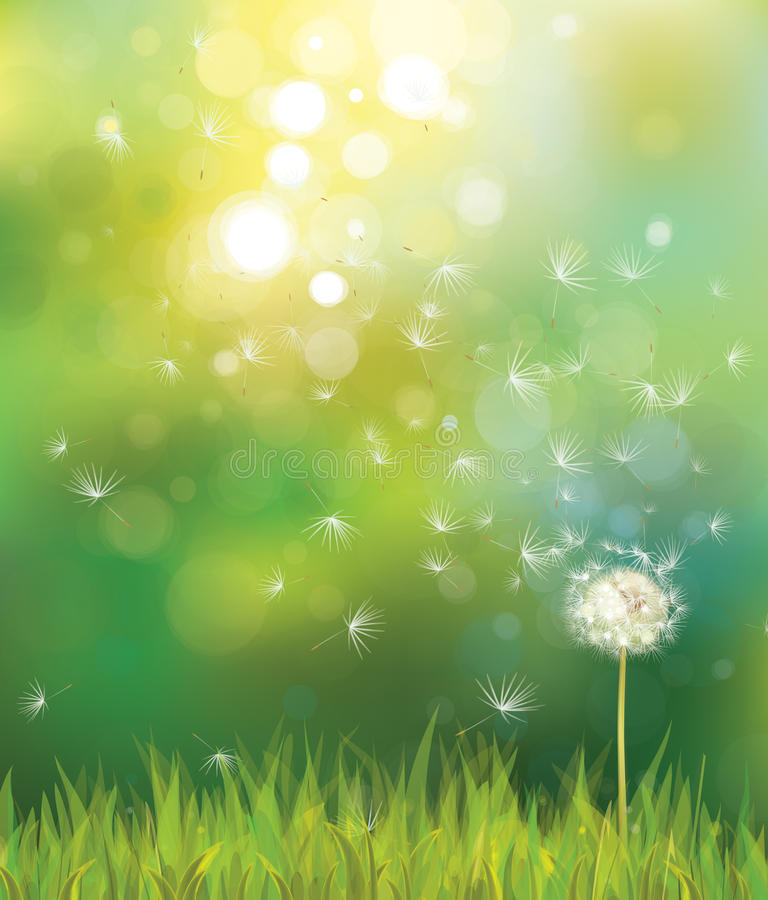Vector Of Spring Background With White Dandelion. Royalty
