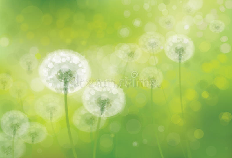 Vector spring bokeh background with white dandelions. royalty free illustration