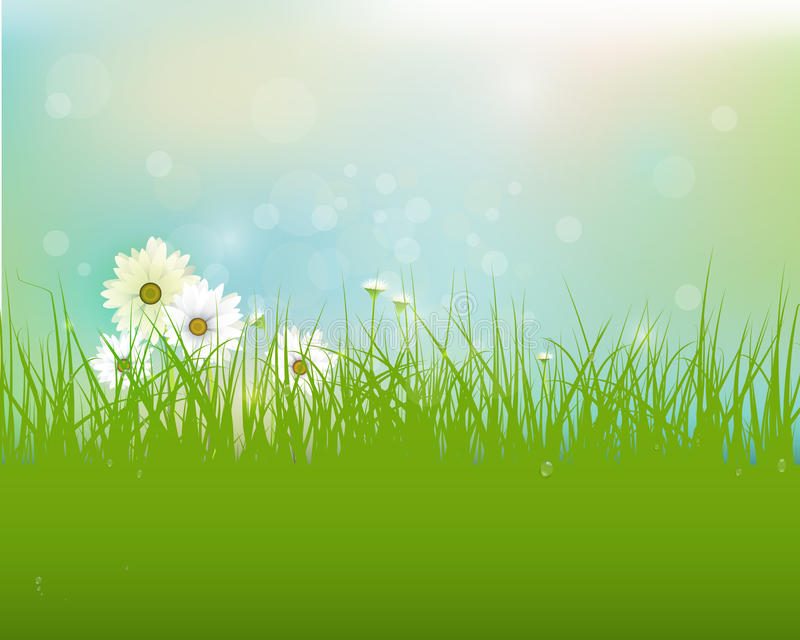 Vector Spring nature field with green grass, white Gerbera- Daisy flowers and water drops dew on green leaves stock illustration