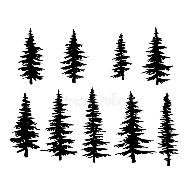Free Vector Spruce Tree, Ink Plant Sketch, Hand Drawing, Black Silhouette Stock Photo - 177038370