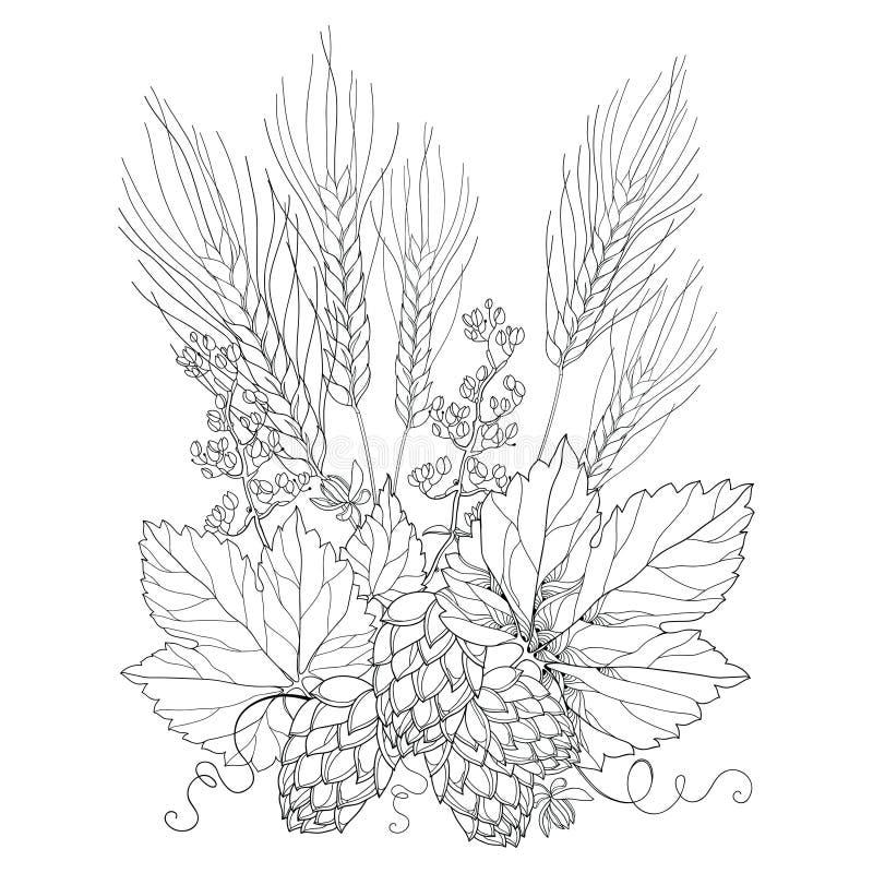 Vector stem with ornate Hops and barley ears. Outline barley and hops in black on white. stock illustration