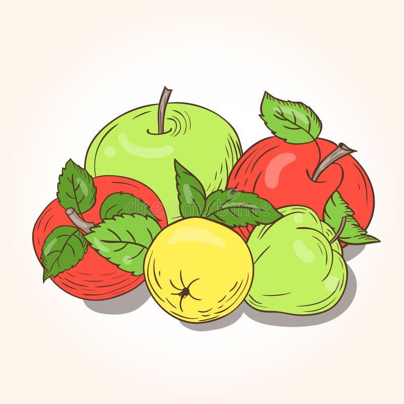 Vector still life of ripe apples. Red, green and yellow apples - still-life royalty free illustration