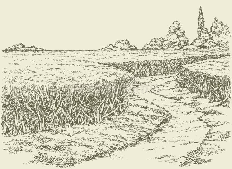 Vector summer landscape. Dirt path through fields of wheat. Vector summer landscape. A dirt path through fields of wheat stock illustration