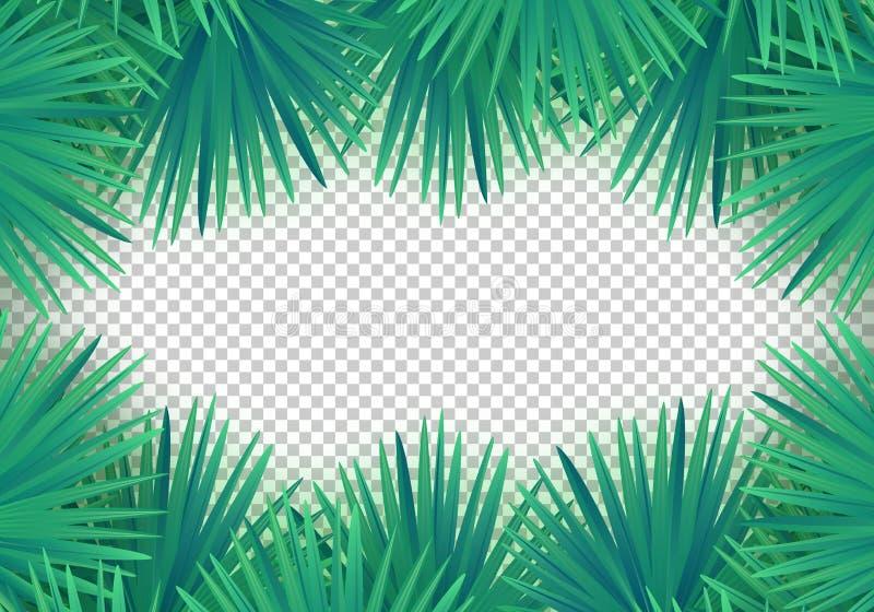 Vector Summer palm leaves on transparent background. Trendy tropical frame royalty free illustration