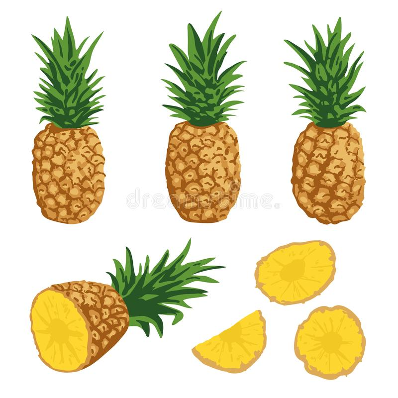 Vector summer set with pineapples isolated on white background stock illustration