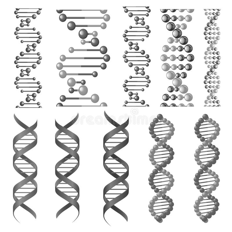 Vector symbols of dna helix or molecular chain. DNA or RNA helix vector isolated icons. Symbols of chromosome cell molecule, molecular chain of human genes or royalty free illustration
