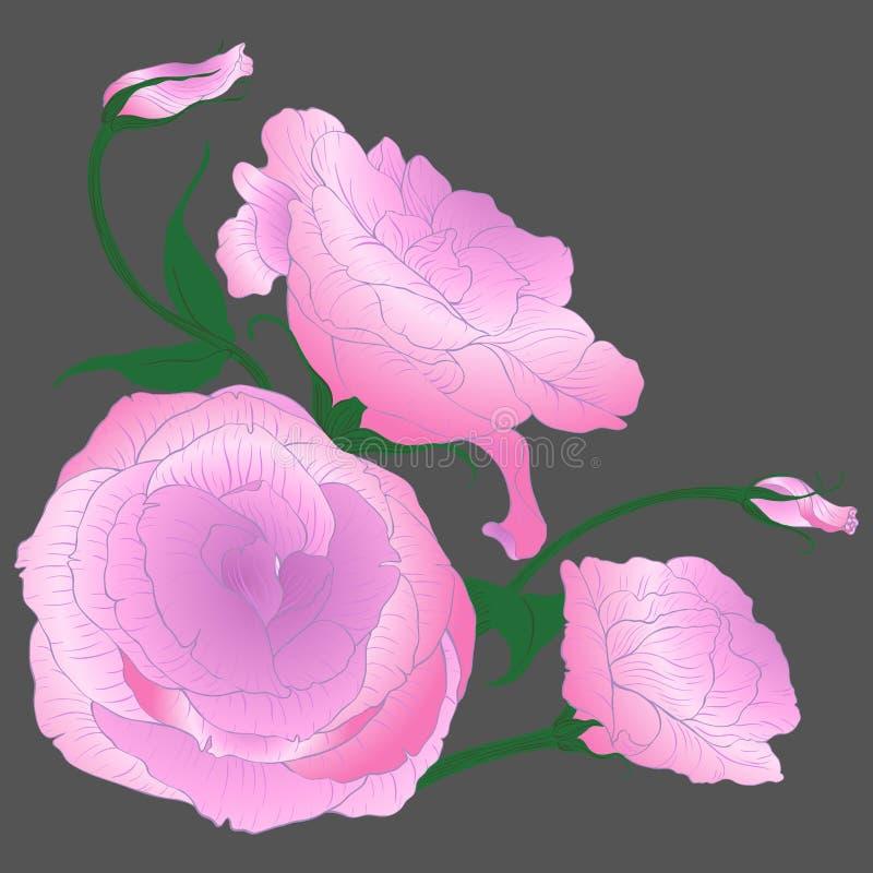 Vector tekening Eustoma - bloemen en knoppen Decoratieve samenstelling - een boeket van bloemen vector illustratie