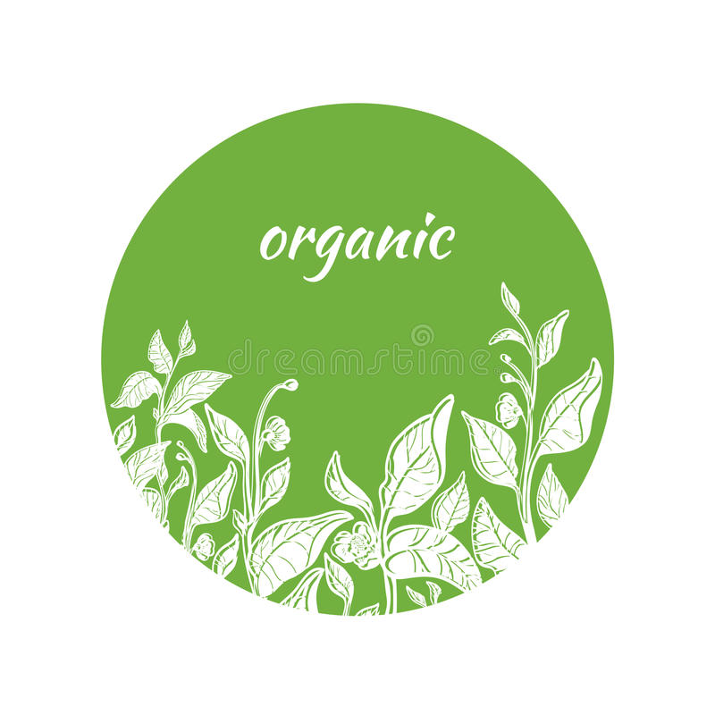 Vector template with green tea branches in circle. stock illustration