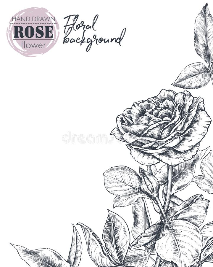 Vector template for greeting card or invitation with hand drawn rose flowers stock illustration