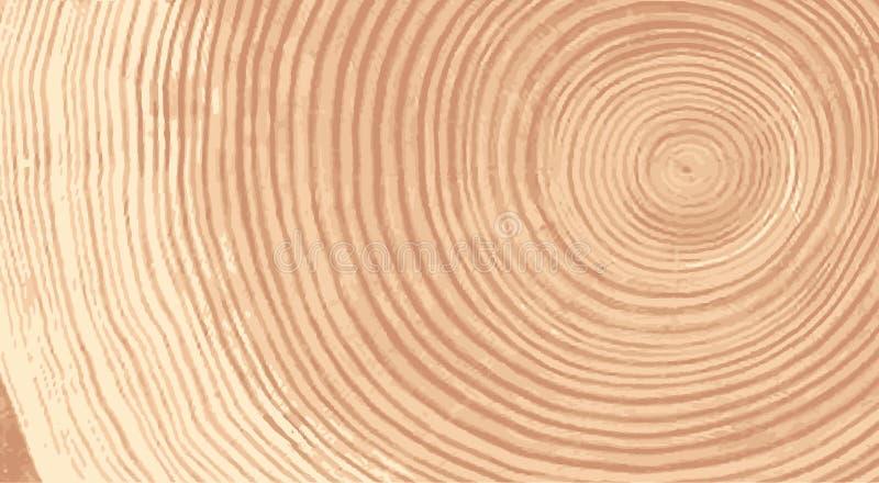 Vector a textura de madeira do teste padrão ondulado do anel de uma fatia de árvore Coto de madeira do Grayscale isolado no branc ilustração do vetor