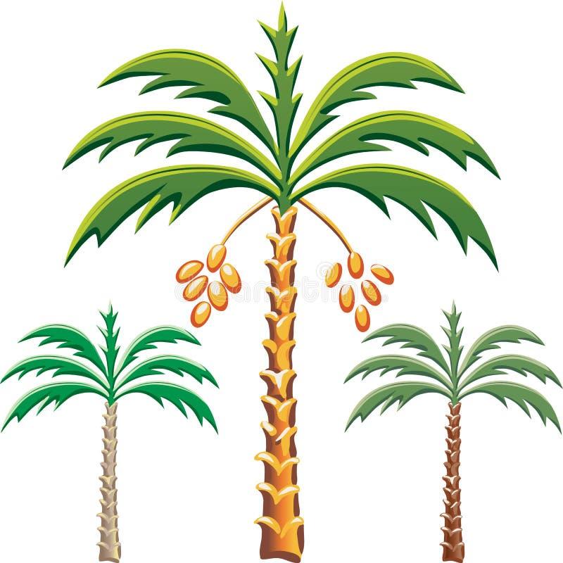 vector three date palm trees stock illustration illustration of rh dreamstime com Palm Tree Leaf Pattern Cartoon Tree Clip Art