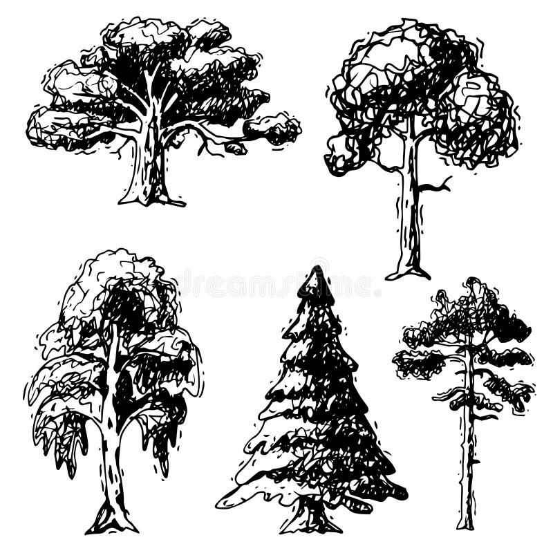 Vector tipos tirados mão coleção verde do estilo do esboço da árvore das copas de árvore do pinho da floresta do vidoeiro, o cedr ilustração royalty free
