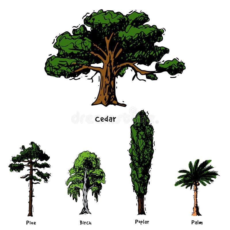 Vector tipos tirados mão coleção verde do estilo do esboço da árvore das copas de árvore do pinho da floresta do vidoeiro, o cedr ilustração do vetor