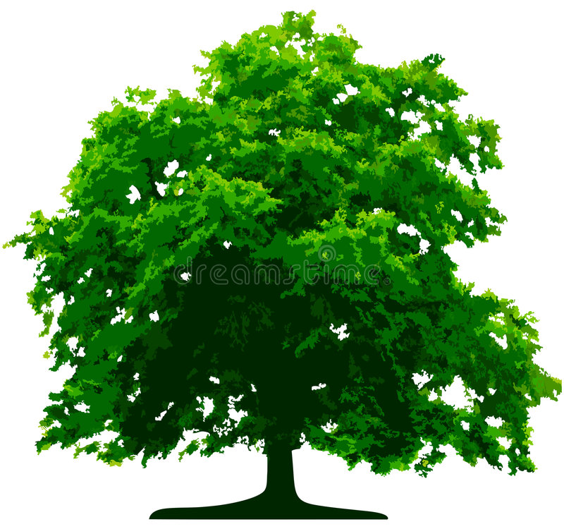 Free Vector Tree Royalty Free Stock Photography - 5748777