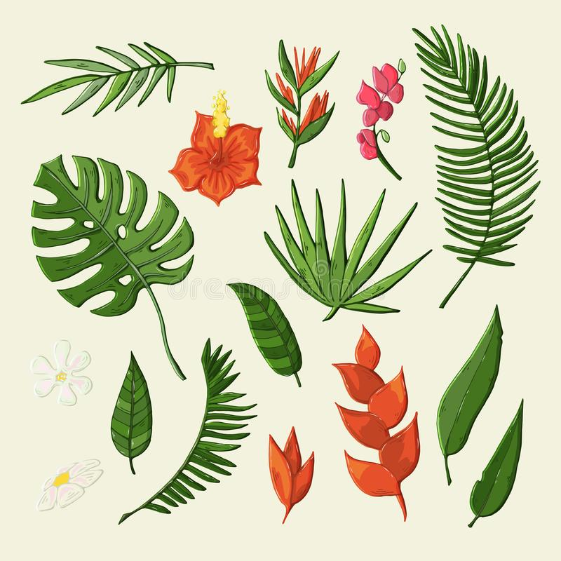 Vector tropical flovers and leaves object set vector illustration