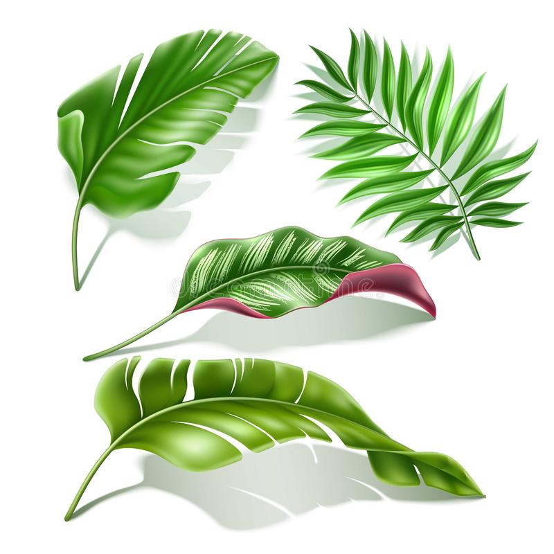 Vector Tropical Leaves Realistic Monstera Palm Set Stock Vector Illustration Of Aloha Background 144763458 ✓ free for commercial use ✓ high quality images. vector tropical leaves realistic