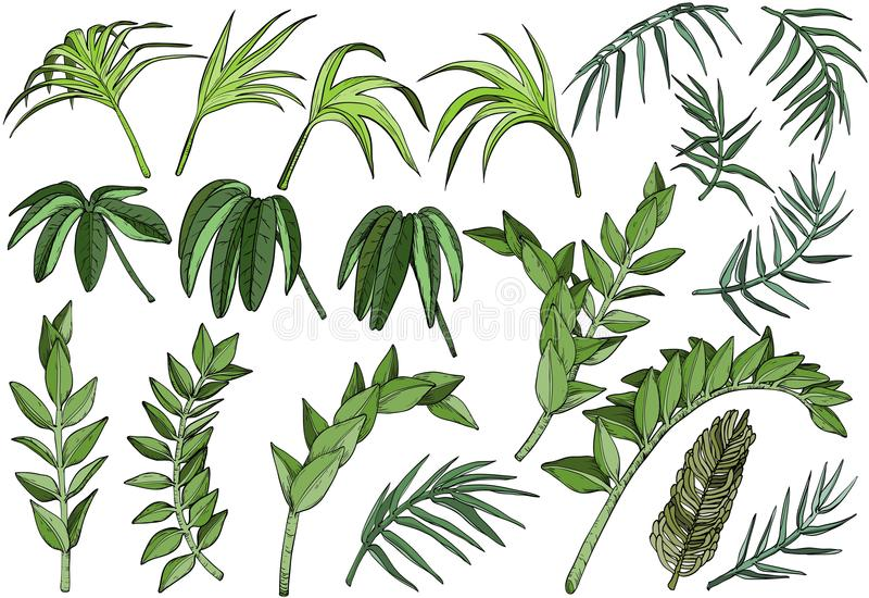 Tropical palm jungle plants set vector illustration