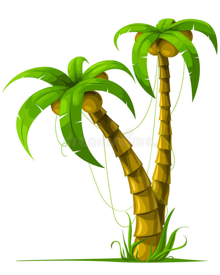 Vector tropical palm trees isolated on white. Background vector illustration stock illustration