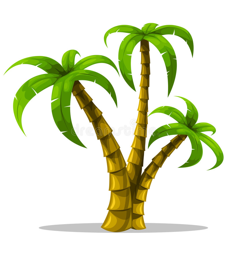 Vector tropical palm trees isolated on white stock illustration