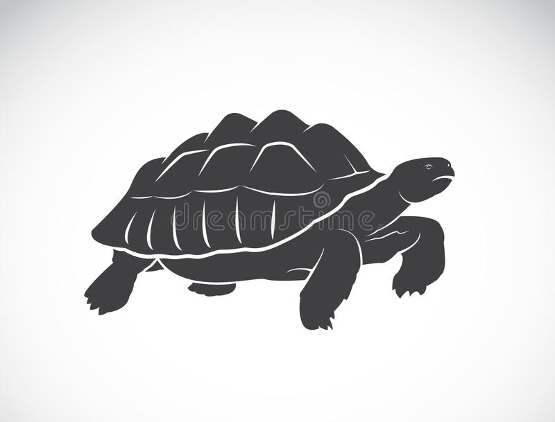 Vector of a turtle on white background. Reptile. stock illustration