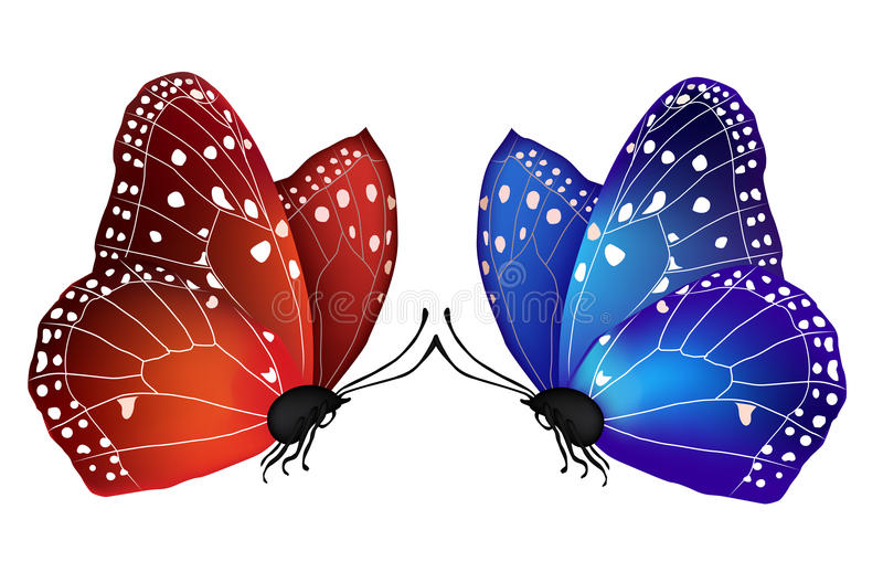 Vector two butterflies in love royalty free illustration