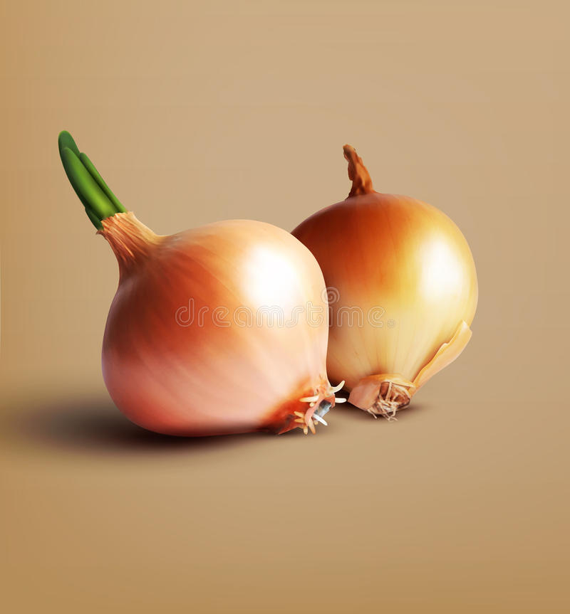 Free Vector Two Onions Isolation On Beige Background Royalty Free Stock Image - 74258036
