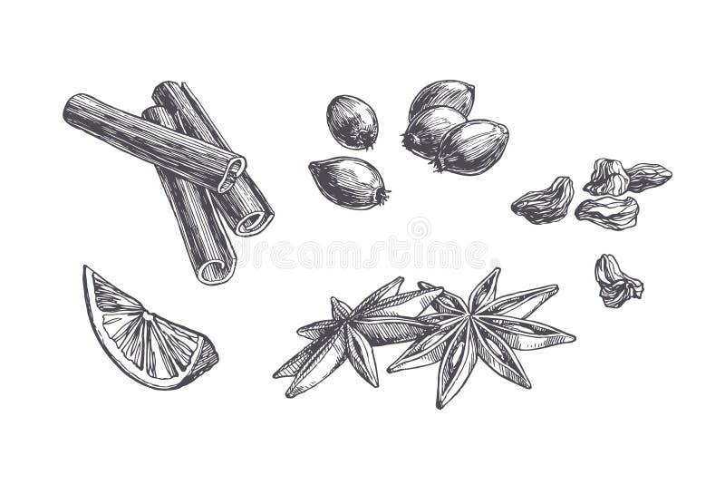 Vector uitstekende die reeks kruiden en snoepjes op wit worden geïsoleerd Hand getrokken illustratie van kaneel, kardemom en bess royalty-vrije illustratie