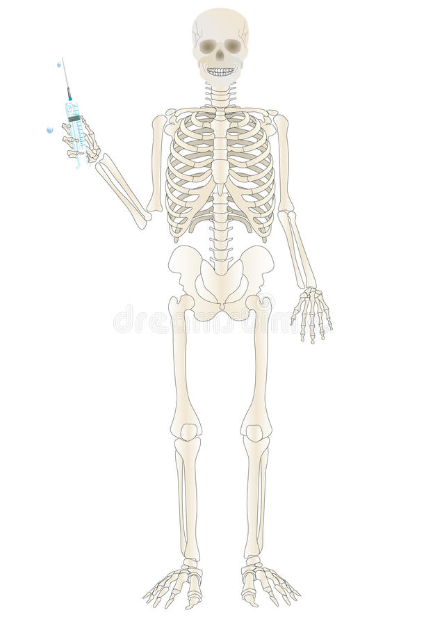 Vector Un Esqueleto De La Persona Ilustración del Vector ...