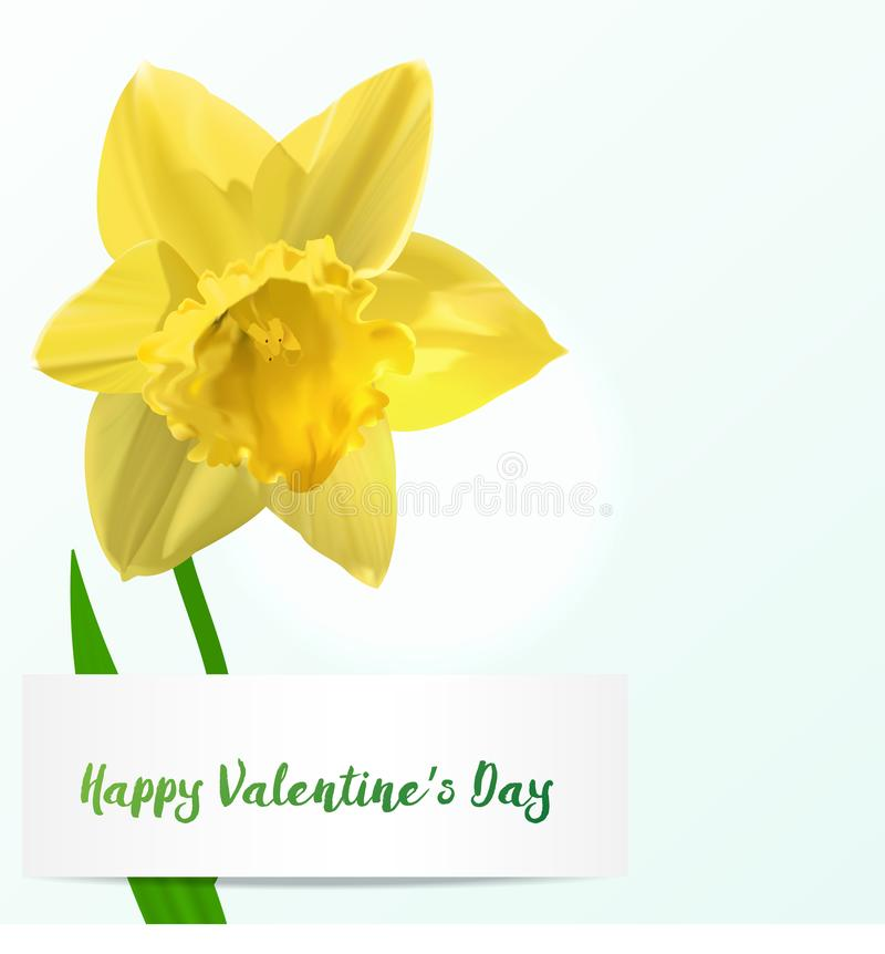 Vector Valentine background with jonquil royalty free illustration
