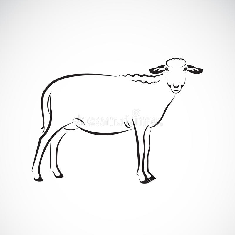 Vector van een schaap op witte achtergrond vector illustratie