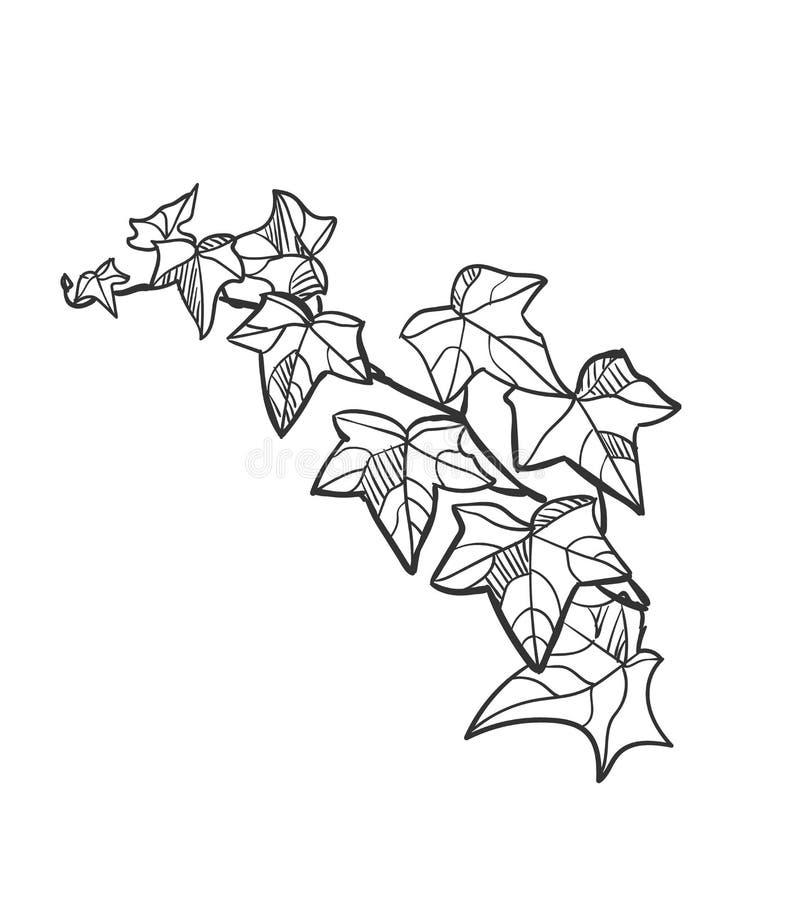Vector van het ontwerpelementen van de schetsillustratie de installatieklimop vector illustratie