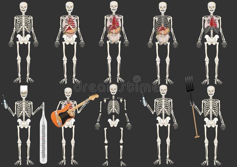 vector Vastgesteld Skelet van de persoon vector illustratie