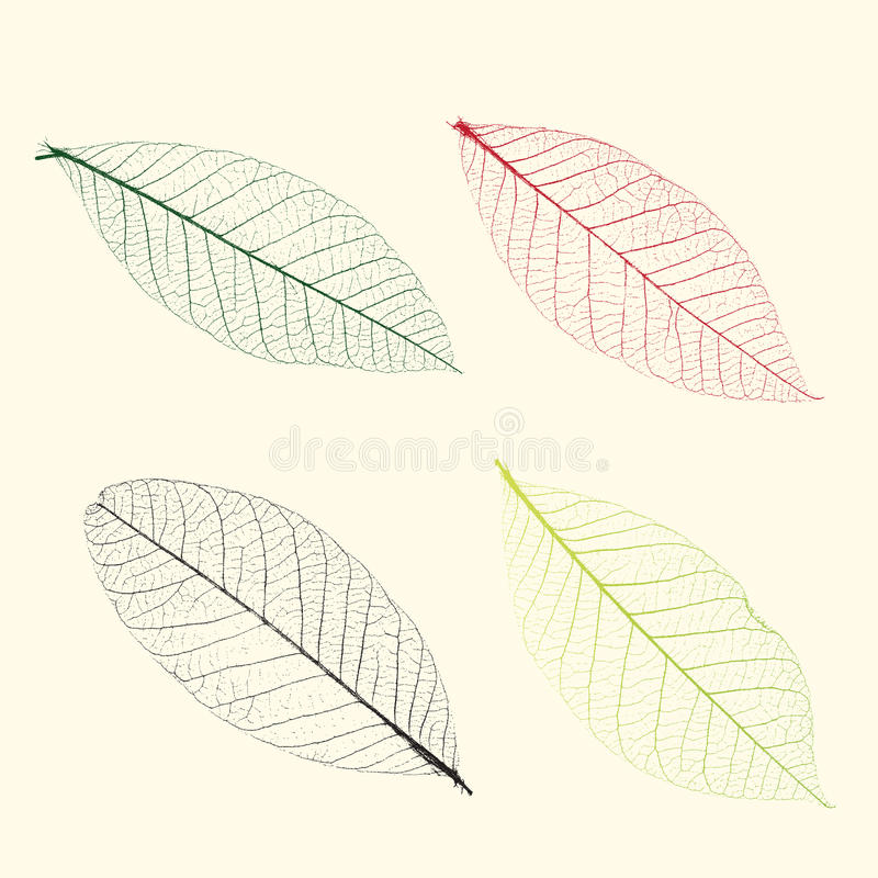 Vector veins of plants vector illustration