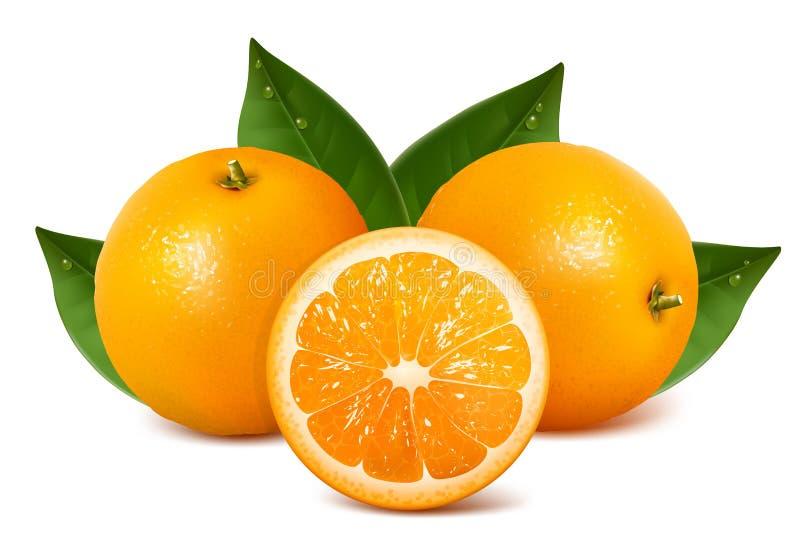 Vector verse rijpe sinaasappelen met bladeren vector illustratie