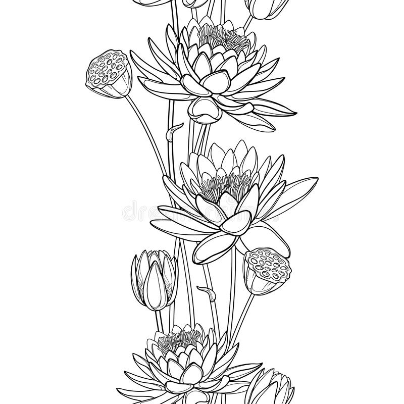 Free Vector Vertical Seamless Pattern With Outline Lotus Or Water Lily Flower, Bud And Seed Pod In Black On The White Background. Royalty Free Stock Image - 189342396