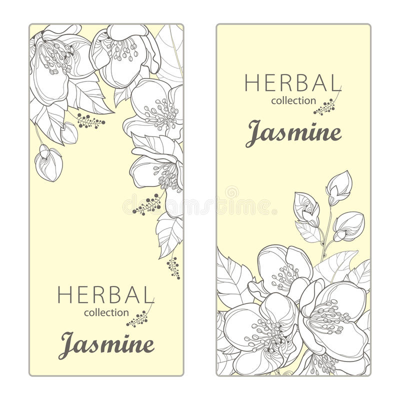 Vector vertical templates with outline Jasmine flowers, bud and leaves. Floral design for poster, banner, package. vector illustration